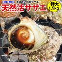 長崎産天然サザエ 特大サイズ 1.5kg
