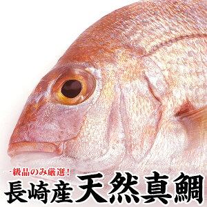 魚ランキング