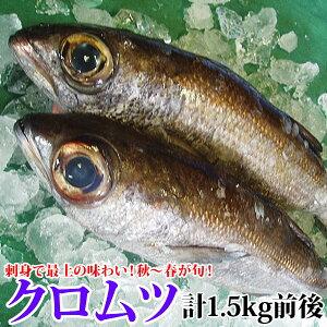 クロムツ(黒ムツ) 計1.5kg前後(700g前後2尾又は1.5kg前後1尾)超高級魚!脂のの…