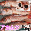 のどぐろ(アカムツ) 1尾(1kg前後)脂のしたたる高級魚をご自宅で!【RCP】【140405coupon300】【05P06May14】