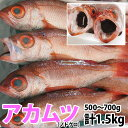 のどぐろ(アカムツ) 計1.5kg(500g〜700g前後)脂のしたたる高級魚をご自宅で!【RCP】【140405coupon300】【05P06May14】