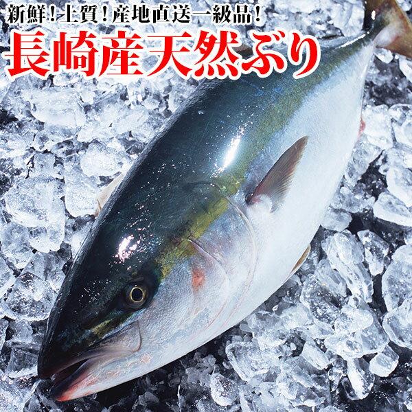 (送料無料)長崎産天然ブリ(寒ぶり) 7kg前後1本鮮度よし!味よし!一本釣りで水揚げされた最高級品!(年末年始お届け)(RCP)