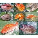 旬の美味くて、安心、安全お値打の鮮魚を赤字覚悟で大奉仕!こだわり社長イチオシのよか魚種類...