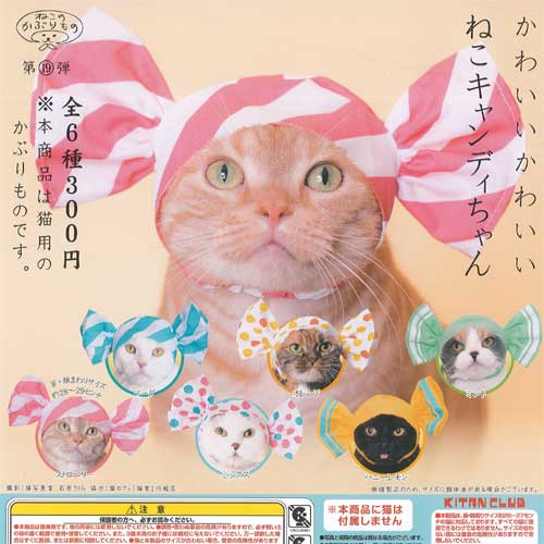 猫用品, キャットウェア  6 19
