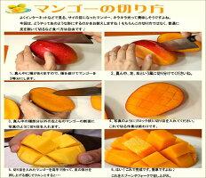 A品・徳之島産・完熟・百菜マンゴー(1kg・2玉〜3玉)送料無料(一部地域を除きます)お中元に!ギフトに!今年は良品が豊作。