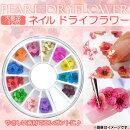 送料無料!APネイルドライフラワー天然花/12色やさしい素材レジンアートにも♪AP-TH254JAN:4562430547303
