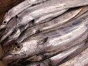 淡路島より水揚げ即日発送塩焼き・天ぷら・お刺身もOK淡路島産(釣)タチウオ約700g大サイズ1本