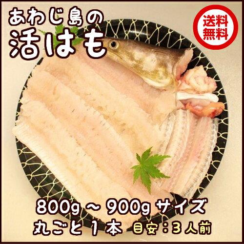 淡路産活はも丸ごと1本800g〜900gサイズ【sm...