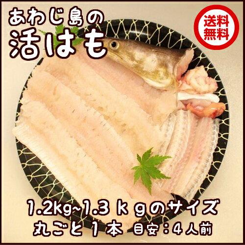 淡路産活はも丸ごと1本1.2kg〜1.3kgサイズ【...