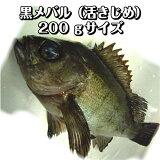 淡路産黒メバル(活じめ)200gサイズ1尾(めばる・クロメバル・くろめばる)