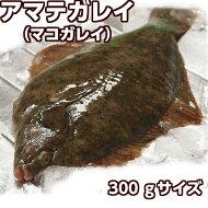 淡路島愛ちゃん玉葱