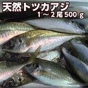 淡路産天然トツカアジ(中大サイズ)1尾または2尾入り合計500g(活じめ)(マア...