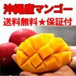 【送料無料】お中元に!沖縄産チャンピオンマンゴー大玉2kgお中元・お供え・お裾わけのギフトとして