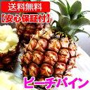 沖縄産ピーチパイン(パイナップル) 安心保証付き 送料無料お試し1.5kgサイズ(2〜4個)自社管理 ...