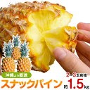 スナックパイン 沖縄産 パイナップル 約1.5kg 送料無料自社管理農園から直送だから安心保証付き沖 ...