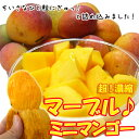 沖縄産マーブルミニマンゴー500g(4〜10個)平均糖度18度〜21度!超!濃縮ミニマンゴー【2セッ...