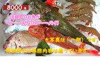 ♪『鮮魚』産直! 何が入っているかお楽しみ(=^・^=)下処理をして発送!