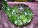 エコ山口100有機無農薬野菜セット(10品目以上)