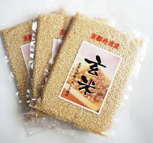 京都丹波の玄米 お試しパック300g×3袋セット 京都産米令和2年産米 京丹波産 こしひかり玄米 新包装 源流水耕作 コシヒカリ