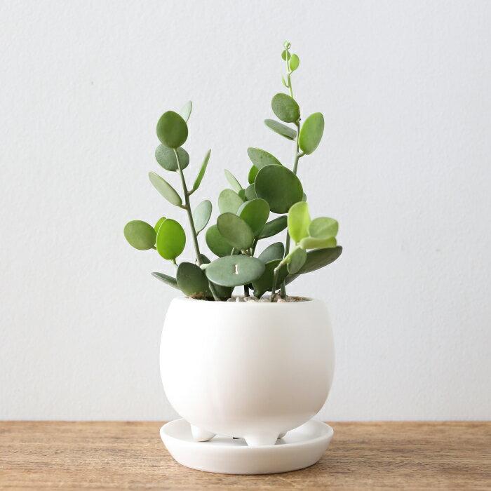 グリーンドラム 観葉植物 おしゃれ 人気 多肉植物 小さい