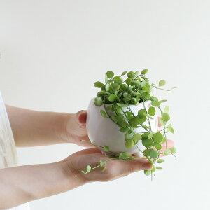 ディスキディア・ハートジュエリー(三つ足ボールPOT・受皿つき)