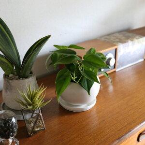 観葉植物/