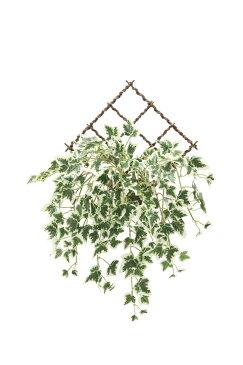 アートグリーン 壁掛斑入りアイビー〔壁掛けタイプ〕/光触媒 観葉植物 フェイクグリーン 花 胡蝶蘭 開店祝い 開業祝い 誕生祝い 造花 アートフレーム おしゃれ LLサイズ