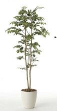 《光触媒観葉植物》マウンテンアッシュ1.6〔フロアタイプ(ハイサイズ)〕