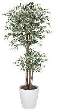 《光触媒観葉植物》トロピカルベンジャミン斑入り1.8〔フロアタイプ(ハイサイズ)〕【_包装】【_のし宛書】【_メッセ入力】