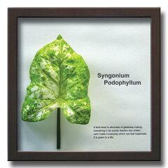 《リーフパネル》Forest Deco Syngonium Podophyllum(シンゴニウム・ポドフィルム)/絵画や壁掛...