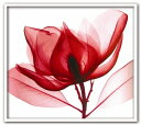 《レントゲンフォトフレーム・絵画》Red Magnolia(レッド マグノリア)/絵画や壁掛けなど10,00...