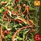 【送料無料】乾燥野菜 国産 切干ピーマン 10g×6個(無添加)*北海道産・農家の手づくり…