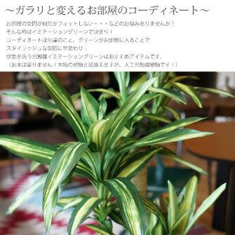 幸福の木1、6(ドラセナ・フラグランス・マッサンゲアーナ)光触媒イミテーショングリーン日本製