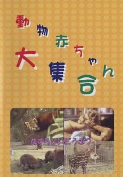 動物赤ちゃん大集合 6 めずらしいどうぶつ【趣味、実用 中古 DVD】メール便可 ケース無::