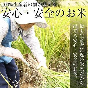 28年産【乾式無洗米】京都府産きぬひかり10kg(5kg×2袋)お米米無洗米10kg送料無料
