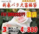 お年玉付き♪四季咲き木立バラ福袋 (国産苗 大苗3鉢)