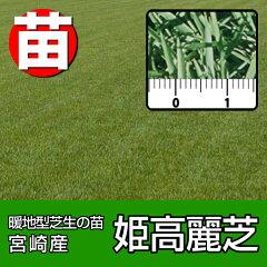 高密度で葉幅1.2~2ミリ程度の日本芝。【注意】正式な送料は別途ご連絡します。【代引不可・送...