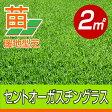 /代引不可/送料無料/セントオーガスチングラス(張り芝用) 宮崎産 2平米(0.6坪分) 園芸