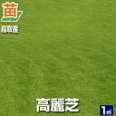 【お届けまでに約3週間かかります】【産地直送】鳥取産 高麗芝 1平米(0.3坪分)(張り芝用)プレミアム苗 芝生 暖地型 天然芝 園芸