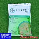 芝生用殺菌剤 シグネチャーWDG 1kg 芝病害 病気 防除 赤焼病 ピシウム病 ベントグラス/あす楽対応/