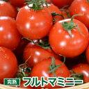 トマト ミニトマト フルーツトマト フルトマミニー 1.5k