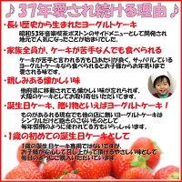大阪ヨーグルトケーキの人気の理由誕生日ケーキ