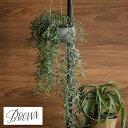 フェイクグリーン 観葉植物 Brown. ブラウン ホヤ ハンギングポット BA360-0 人工観葉植物 造花 ハンギング 鉢 ディスプレイ インテリア 壁掛け 吊るす ペット 【あす楽対応】