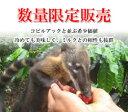 コピルアック類「う●ち」コーヒーペルー産の鼻熊から採取した自然農法コーヒー豆1杯あたり¥52...