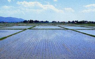 岩手県産「特A」常連のお米江刺金札米「うまい米!無洗」米無洗米(R)2kg送料無料ひとめぼれ2kg×1個2キロレターパック発送