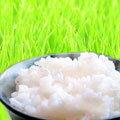 【送料無料】無洗米おためしパック345g×1個入り送料込み