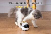 【全米で大ヒット!】EBO 猫おもちゃ猫用スマートロボットEbo(イーボ)可愛い猫のお友達猫の遊び相手になってくれる留守番中の猫ちゃんの不安・運動不足を解消【送料無料】