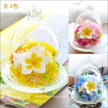 ★ポイント5倍★【送料無料】プルメリアのガラスドーム〈クラウン〉【誕生日】