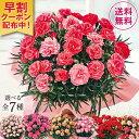 母の日 2021 早割 ギフト ランキング プレゼント カーネーション 花鉢 鉢植え さくらもなか 5号鉢 ピンク 母の日期間お届け