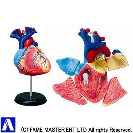 ≪15%OFF≫後払い・コンビニ払いOK!立体パズル 4D VISION 人体解剖 No.10 心臓解剖モデル 【...